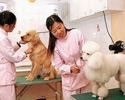 宠物医院短信宣传案例
