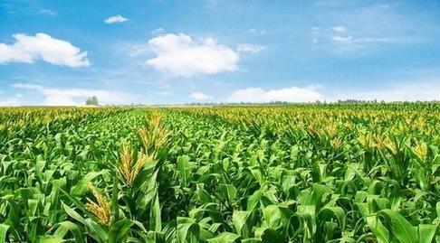 商丘短信群发平台帮助农户第一时间知晓粮食收购价格的变动