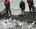某渔业公司短信应用案例