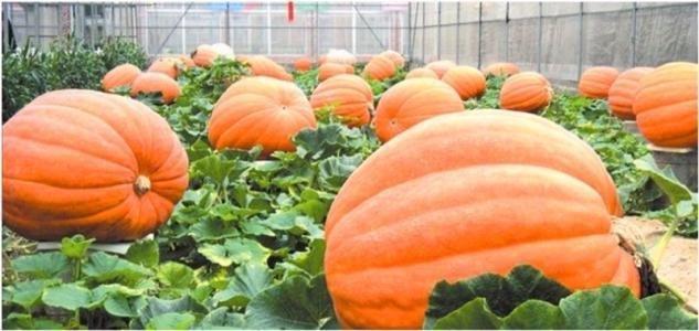 安阳短信群发平台让农科企业的事业如日中天